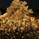 باغ برای مراسم های عروسی